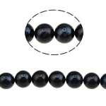 Round Cultured Freshwater Pearl Beads, natural, black, Grade A, 8-9mm, Hole:Approx 0.8mm, Sold Per 15.5 Inch Strand