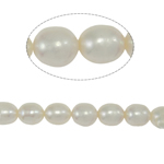 Rice Cultured Freshwater Pearl Beads, natural, white, Grade A, 6-7mm, Hole:Approx 0.8mm, Sold Per 15 Inch Strand