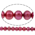 Button Cultured Freshwater Pearl Beads, purplish red, 10-11mm, Hole:Approx 0.8mm, Sold Per Approx 14.5 Inch Strand