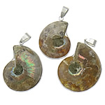 Gemstone Pendants Jewelry, Ammolite, with Brass, platinum color plated, 25-30x30-35x6mm, Hole:Approx 4x6mm, 10PCs/Lot, Sold By Lot
