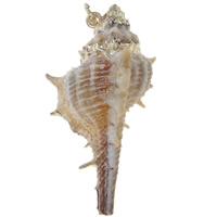 Trąbka naturalnej powłoki wisiorki, Muszla trąbka, ze Mosiądz, Platerowane w kolorze złota, 15x20x15mm-30x40x50mm, otwór:około 2mm, 50komputery/torba, sprzedane przez torba