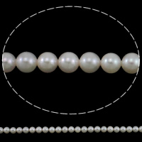 Akoya Cultured Pearl Beads, Akoya Cultured Pearls, Round, natural, white, 5-5.5mm, Hole:Approx 0.8mm, Sold Per Approx 15.7 Inch Strand