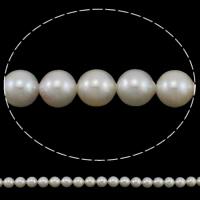 Akoya культивированный жемчуг, Акойя культивированные жем, Круглая, натуральный, белый, 7.5-8mm, отверстие:Приблизительно 0.8mm, Продан через Приблизительно 15.7 дюймовый Strand