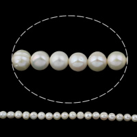 Clearance Freshwater Pearl Beads, Keishi, natural, white, 12-13mm, Hole:Approx 0.8mm, Sold Per Approx 14.5 Inch Strand