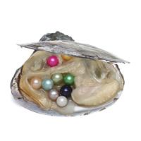 Жемчужная устрица, жемчуг, Много цветов для выбора, 7-8mm, продается PC