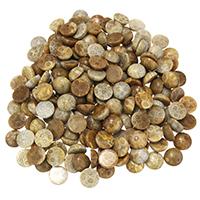 камень хризантема кабошон, Колпак, плоской задней панелью, 14x6mm, 10ПК/Лот, продается Лот