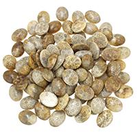 камень хризантема кабошон, Плоская овальная форма, плоской задней панелью, 15x20x6mm, 10ПК/Лот, продается Лот