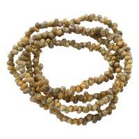 Ракушка Свитер ожерелье, Мужская, 7x4mm, длина:Приблизительно 33 дюймовый, 10пряди/сумка, продается сумка
